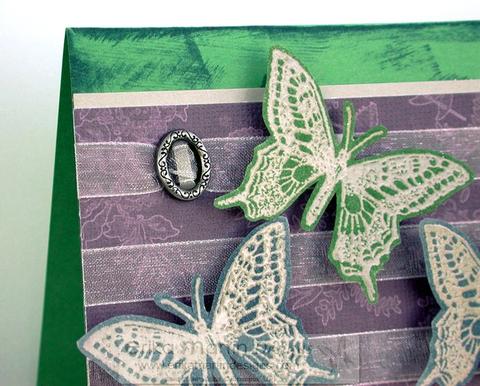 Butterflynew1